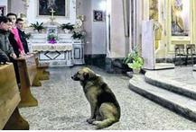 Tommy, il cane che da due mesi attende la padrona morta ai piedi dell'altare