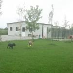 PENSIONE-PER-CANI_BRESCIA_0011-1000x1024
