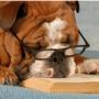 L'allevamento di cani di razza come imprenditore agricolo